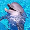 Dolphin Snorkeling Encounter