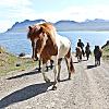 Viking Horse Tour