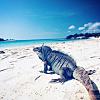 Iguana Island excursion
