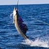 Hawaiian Fishing Trip