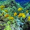 Snorkeling Molokini Tour