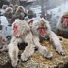 A Trip to Jigokudani Monkey Park