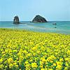Jeju Island Hotel