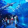 Activity: Maui Ocean Center