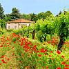Tuscanny Wine Tasting Day Trip