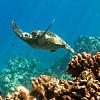 Lanai Wildside Raft Snorkeling Trip