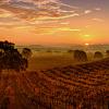 Sonoma Wine Tour with Transportation