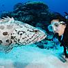 Dive at Cod Hole