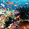 Fiji Scuba-diving