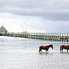 A romantic horseback ride on the beach