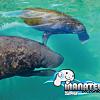 Manatee Swim Encounter (For 2) at Xel-Ha