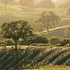 Wine Tour of Monterey
