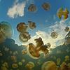 Dive at Jellyfish Lake