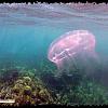 Snorkeling at Vieques