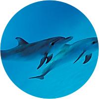 Zanzibar Dolphin Adventure