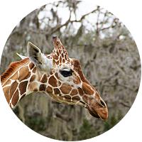 Disney's Animal Kingdom Park day passes