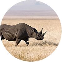 Park fees : Ngorongoro Conservation Area