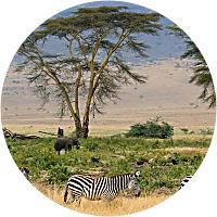 Safari vehicle and guide : Olduvai Camp to Dunia Camp
