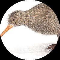 Visit to Kiwi Birdlife Park