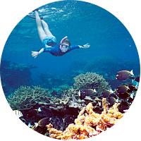 Weekly Snorkel Rental