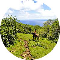 Maui Stables