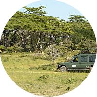 Jeep Safari in Selous