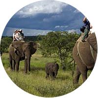 Riding Elephants at Victoria Falls