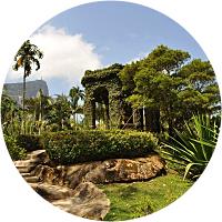 Rio's Botanical Gardens