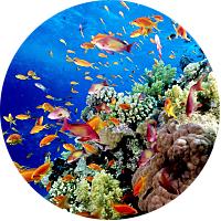 Glass Bottom Boat Tour of Arashi Reef