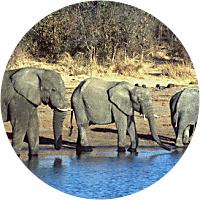 4 Days on Safari
