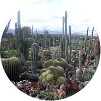 Sheilam Cactus and Succulent Garden