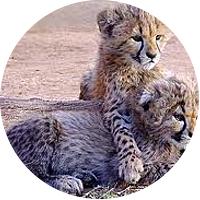 Visit to Cango Wildlife Ranch
