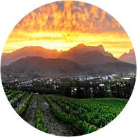 Franschhoek Vineyard day tour