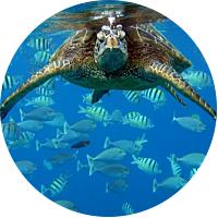 Waikiki Turtle Snorkel Sail & Lunch!