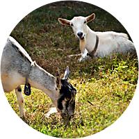 Activity: Kauai Kunana Dairy Farm