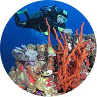 Coral Reef Scuba Dive