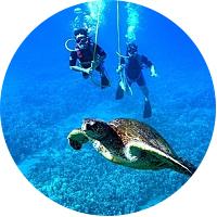 Poipu Guided Snuba Diving Tour