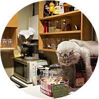Visit to an Animal Cafe