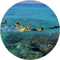 Adventure Park, Zip Line & Snorkel Combo