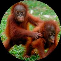 Orangutan Sanctuary Visit
