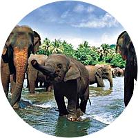 Elephant Safari for two