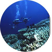 Scuba Dive Day Trip