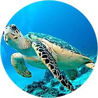 Snorkel Adventure
