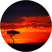 Sunset Safari Drive on the Serengeti