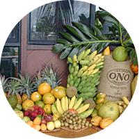 ONO Organic Farm Tour