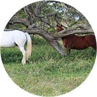 Horseback riding at Puakea Ranch