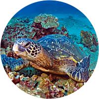 Sea Turtle Snorkel Cruise