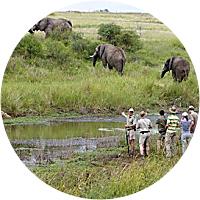 Safari: Day 2 Bush Walk