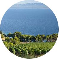 Croatian Winery