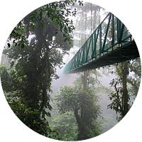 Mounteverde Cloud Forest Hiking